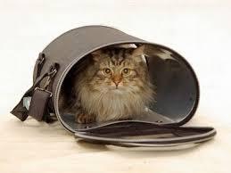 перелет с кошками